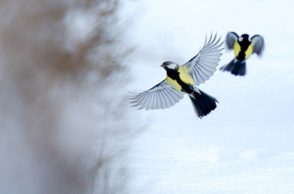 Photograph the flight by Linus Englund on 500px