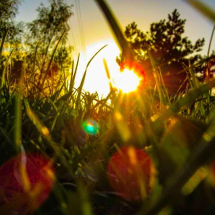 Grass, Canon POWERSHOT SX600 HS