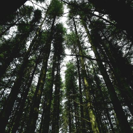Trees have no limits, Fujifilm FinePix S8600 S8650 S8630