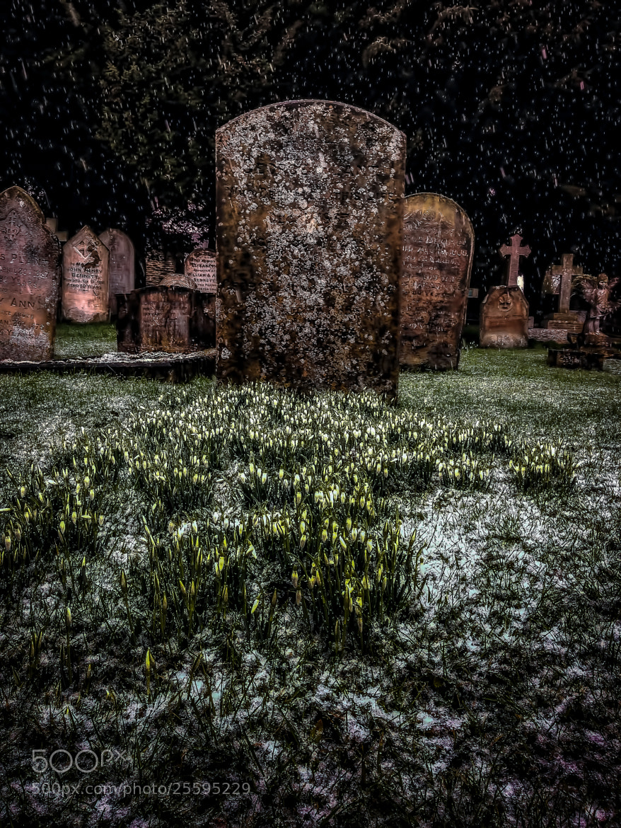 Photograph Snowdrops by Richard Lockwood on 500px
