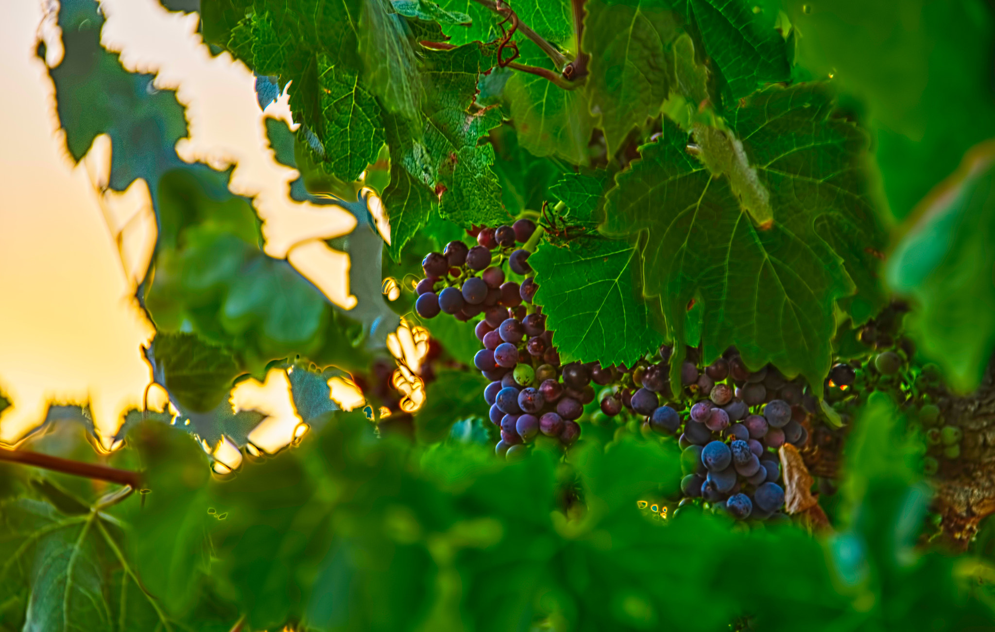 Photograph Wine country by Pieter Pretorius on 500px