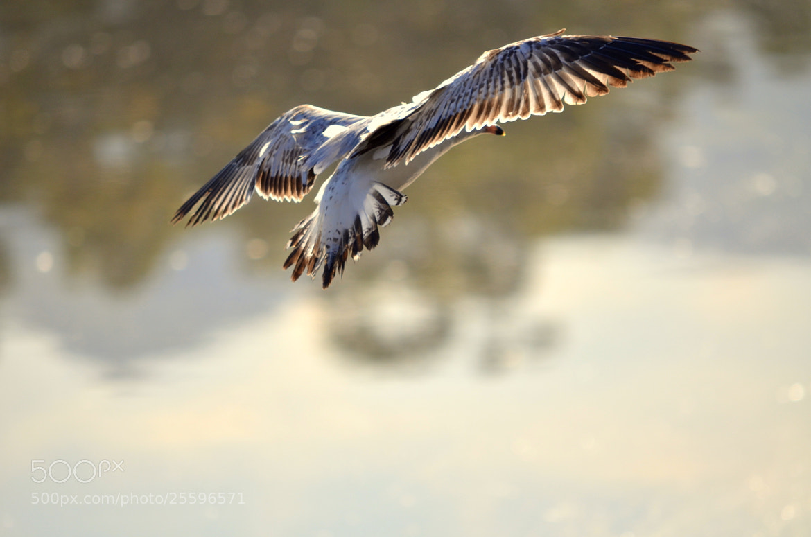 Photograph Spread of freedom... by Senthil Balakrishnan on 500px