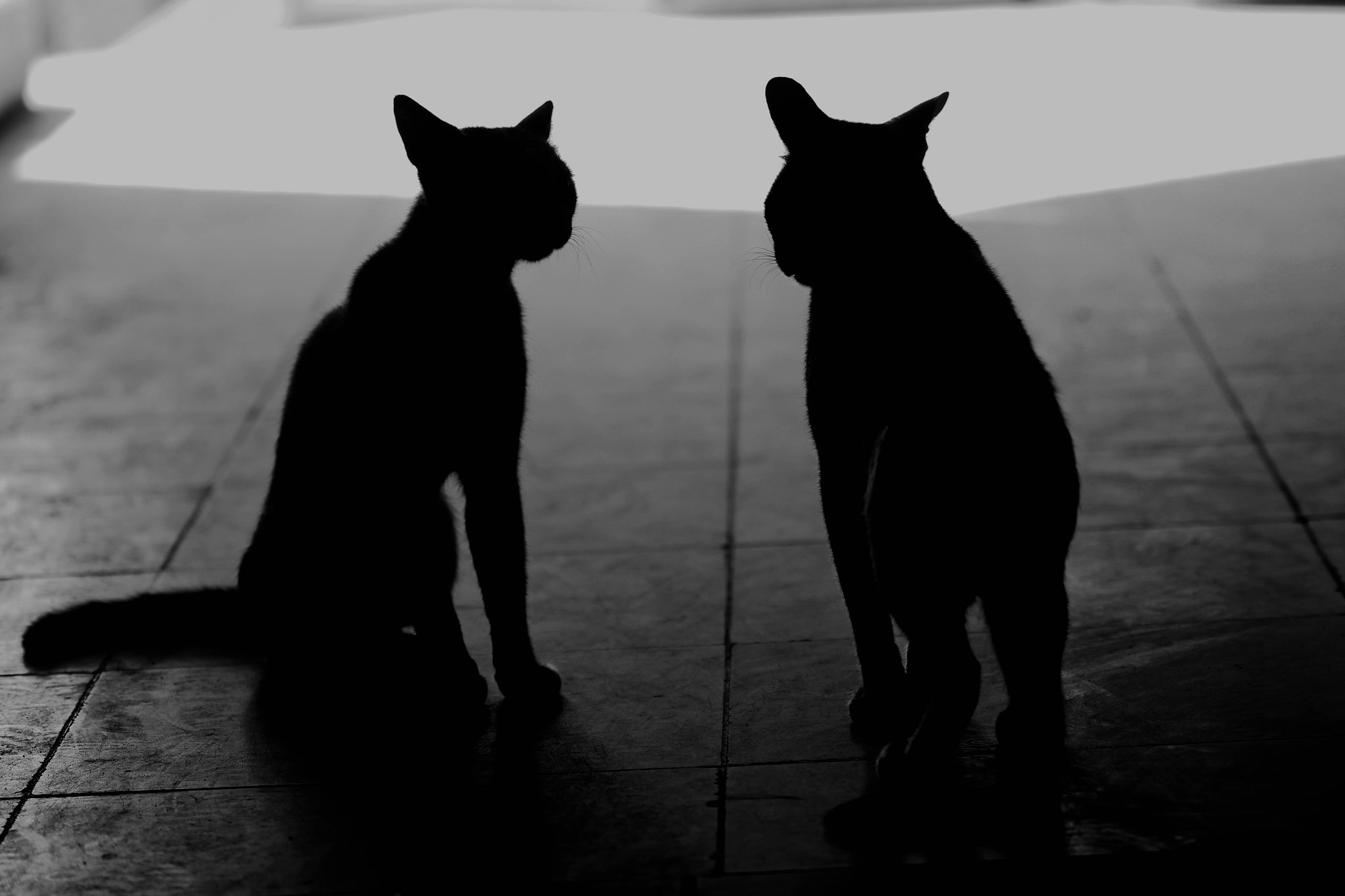 Photograph cats. by Nada Mohammed on 500px