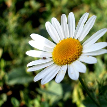 white flower, Nikon COOLPIX L23