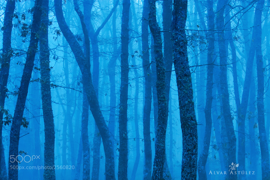 Photograph Blue forest by Alvar Astúlez on 500px