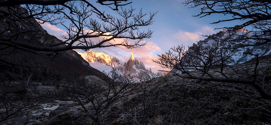 Entangled  by Timothy Poulton on 500px.com