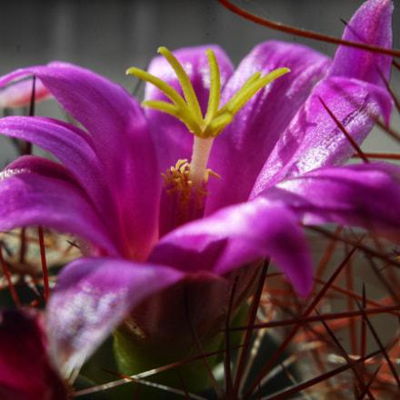 Cactus, Panasonic DMC-GF8