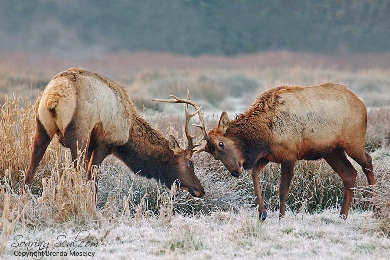 Photograph Face-off by Brenda Moseley on 500px