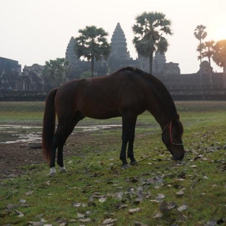 a horse, Sony NEX-6, Sony E PZ 16-50mm F3.5-5.6 OSS