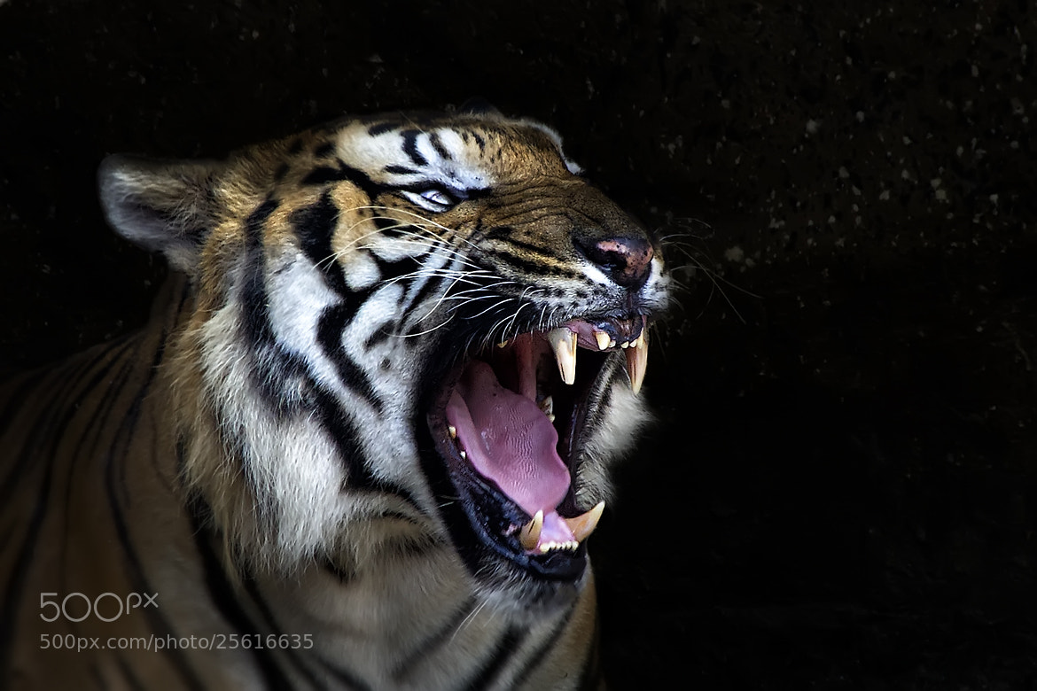 Photograph Predator by Carlos Bermúdez on 500px
