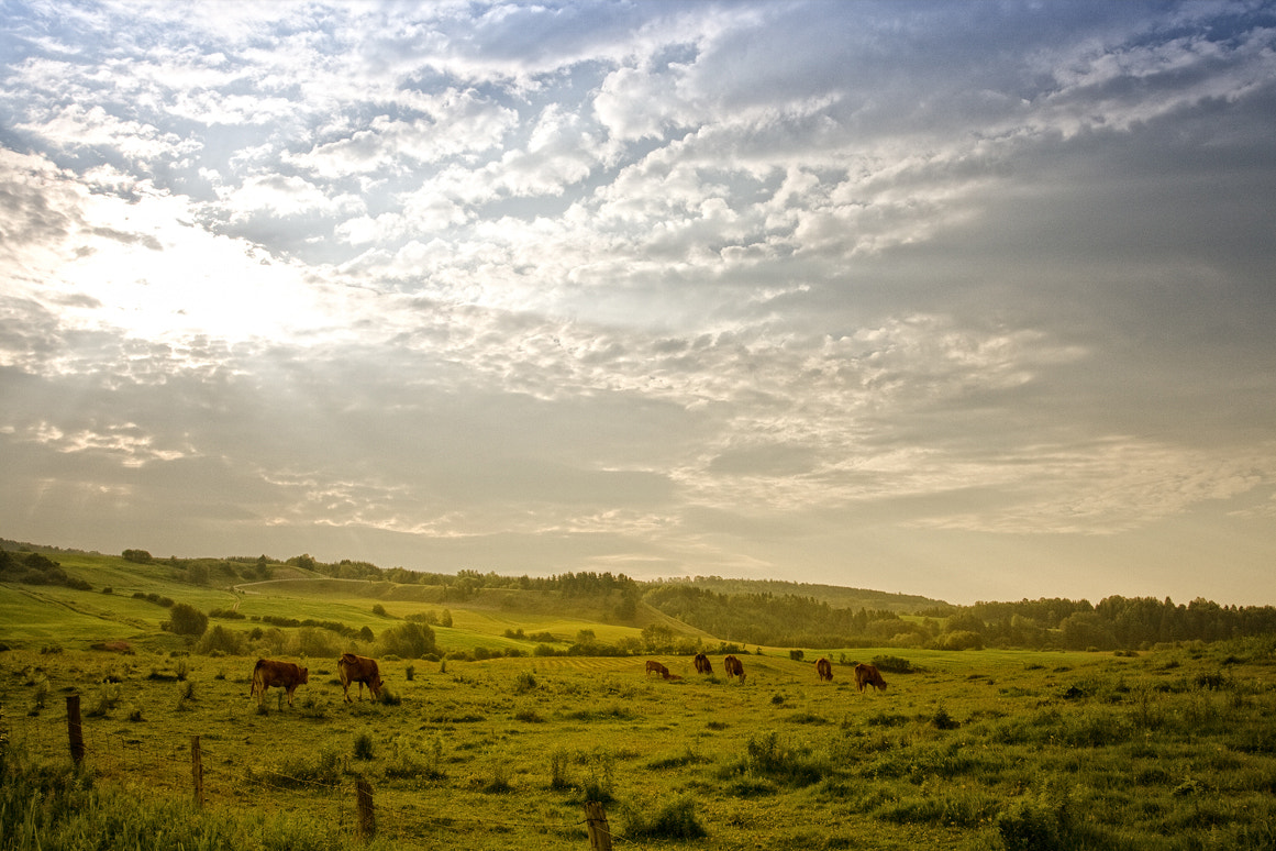 Photograph Bucolic Morning by Renald Bourque on 500px