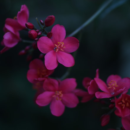 Delicate flower, Canon EOS 750D, Canon EF 35mm f/2