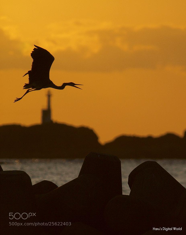 Photograph Sunset flight by Haru Digital phot on 500px