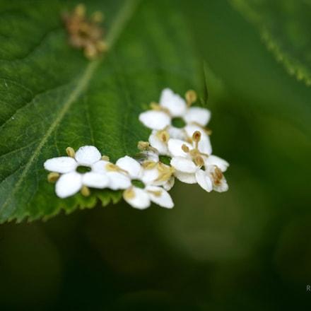 Spring, Pentax K-30