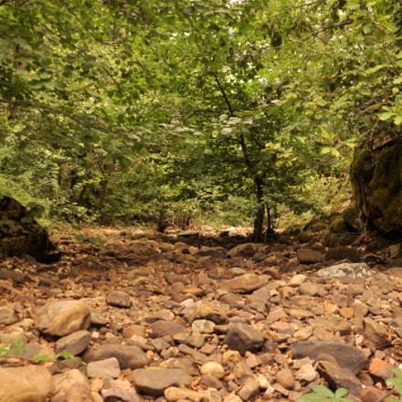 forest, Nikon D90, Sigma 18-200mm F3.5-6.3 DC