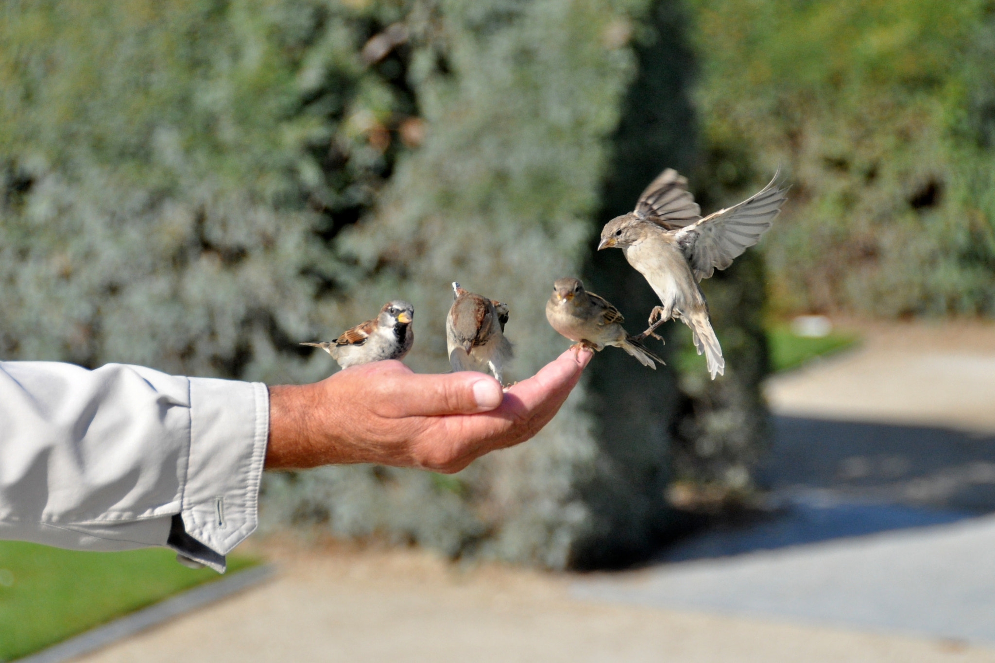 Photograph Birds in the hand by Daniel Esmaili on 500px