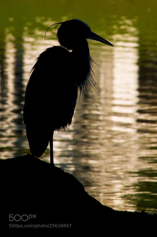 Photograph Heron Silhouette by Glenn  McGloughlin on 500px
