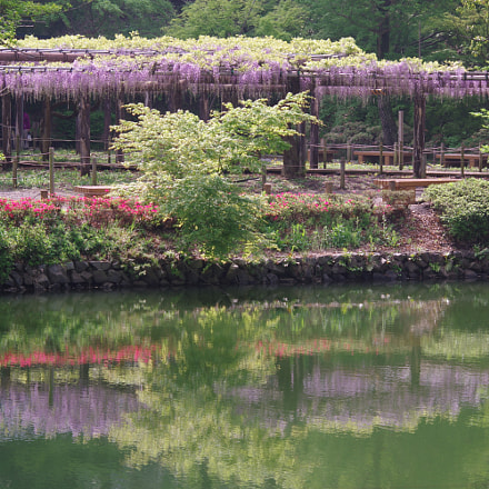 wisteria trelis, RICOH PENTAX K-3 II, smc PENTAX-DA L 55-300mm F4-5.8 ED
