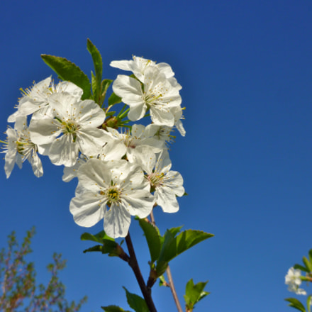 Небесные цветы, Panasonic DMC-FX60