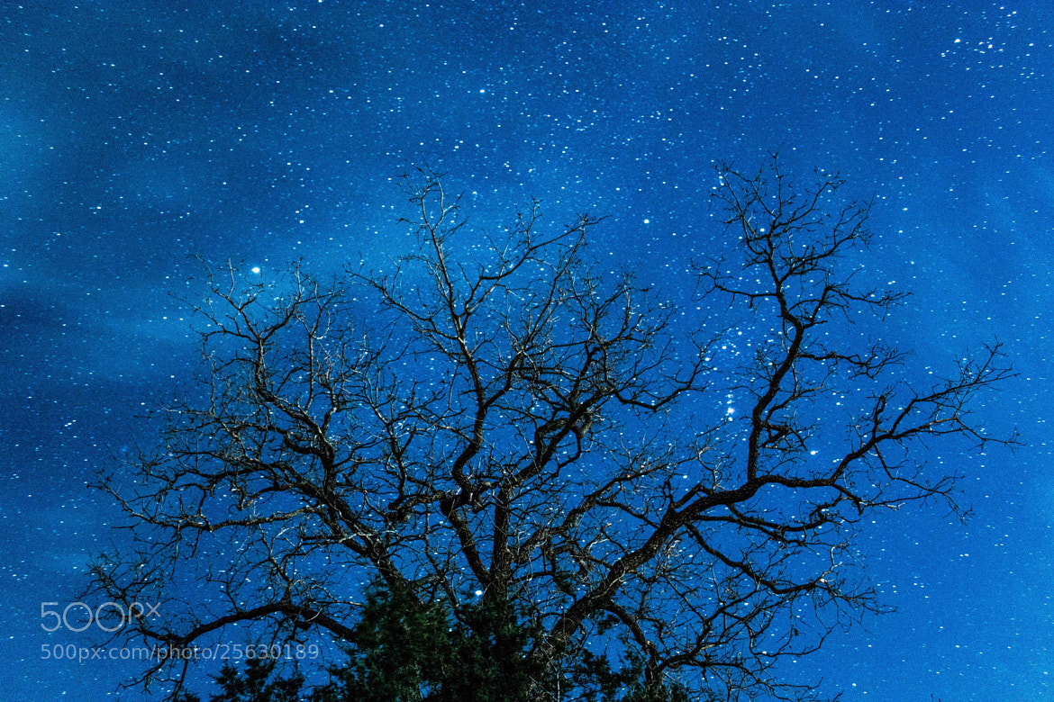 Photograph Tree of Life by Ryan Garza on 500px