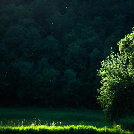 spotlight, Sony DSC-T70