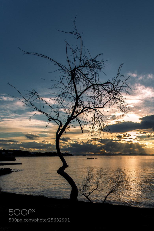 Photograph Leafless silhouette by Dimitris Lantzounis on 500px