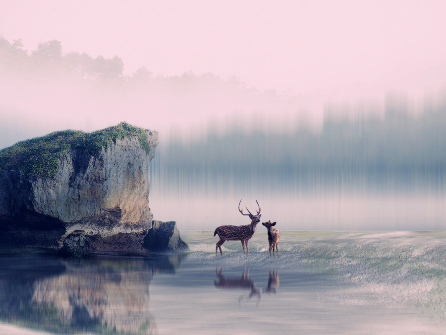 Photograph 2 deer by 3 Joko on 500px