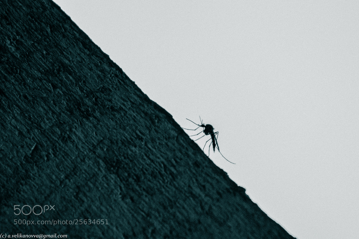 Photograph mosquito by Anna Velikanova on 500px
