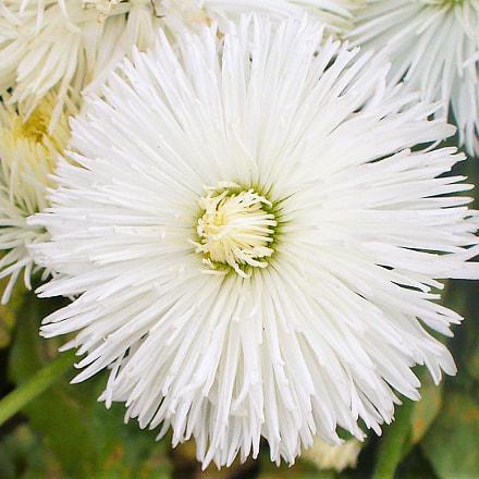 Blanc -White, Panasonic DMC-LZ5