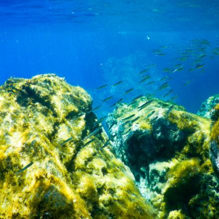 Underwater, Nikon COOLPIX AW130