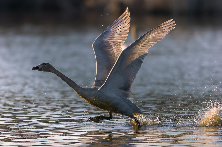 Photograph Take off by Toru Kona on 500px