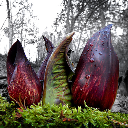 Nature...smells., Nikon COOLPIX AW120