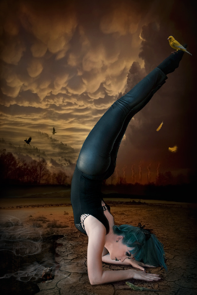 Photograph Canary Love Song by Stasa S on 500px