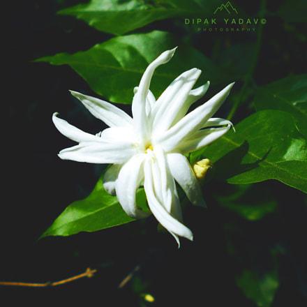Untitled, Nikon COOLPIX L30