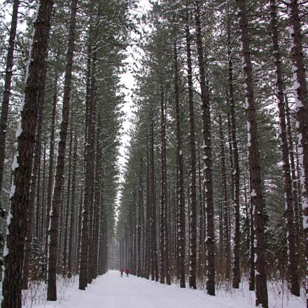 Tall evergreen trees surround, Nikon E8800