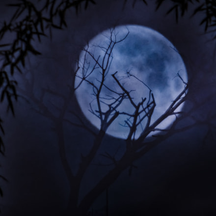 Blue moon, Panasonic DMC-GF8
