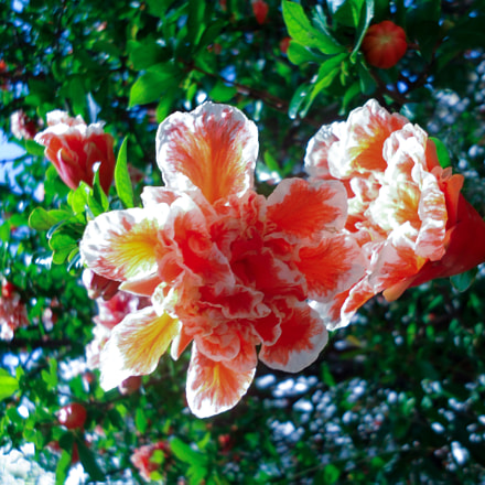 Spring Tree, Sony DSC-W610