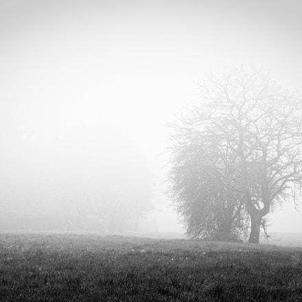 In the mist, RICOH PENTAX K-3, smc PENTAX-DA 50-200mm F4-5.6 ED WR