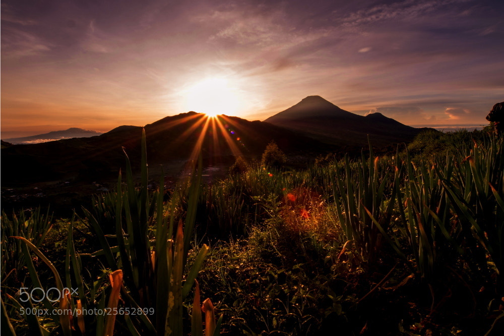 Photograph  Morning Star by Eka Novianto on 500px