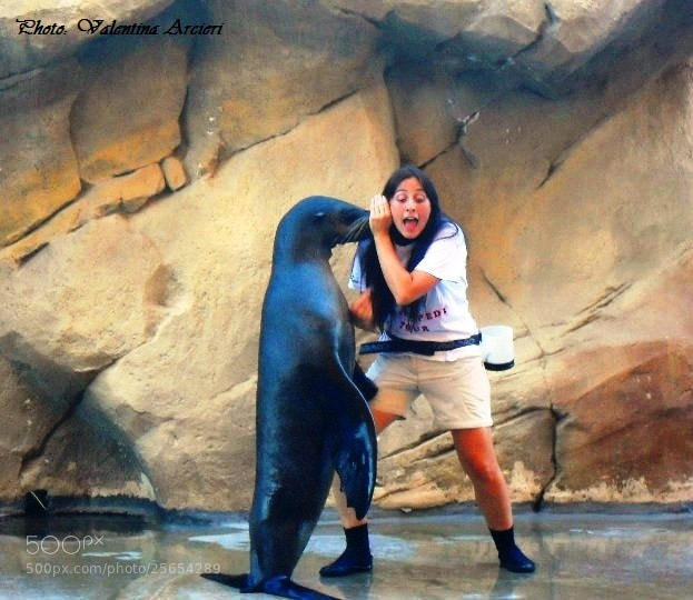 Photograph A seal fun by Valentina Arcieri on 500px