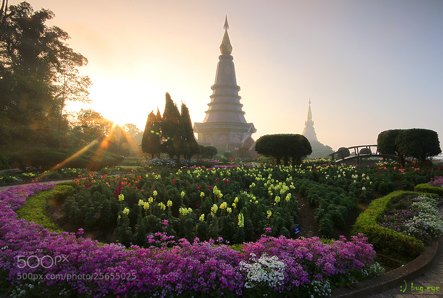 Photograph King and Queen Pagodas by bug eye :) on 500px