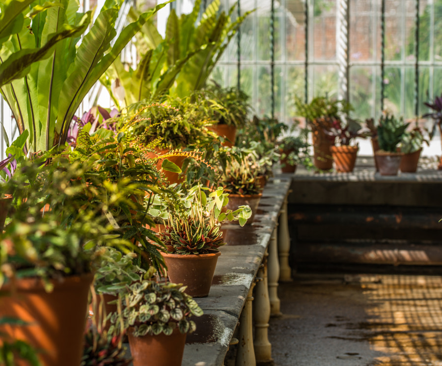 In the Potting Greenhouse by Ian Johnston on 500px.com