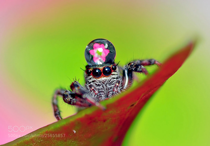 Photograph ...King of Jumper...(oO^Oo)... by Bu Balus on 500px