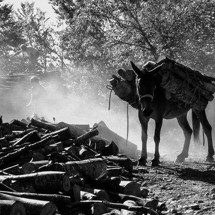 animali al lavoro, Canon POWERSHOT A580