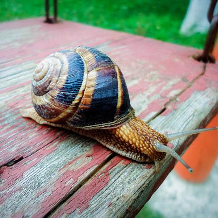 Snail, Sony DSC-W610