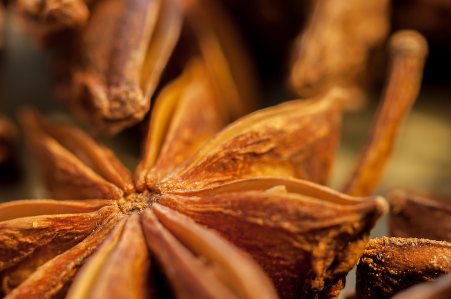 aniseed.八角 by arvin ross on 500px.com
