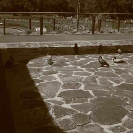 sunbath, Canon EOS M6, Canon EF 24-85mm f/3.5-4.5 USM