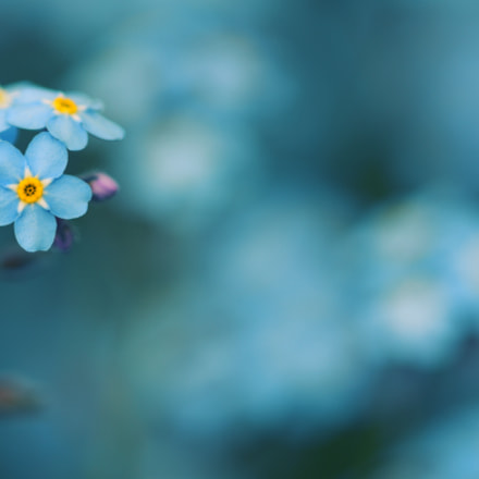The Blue Edition, Nikon D500, AF Micro-Nikkor 200mm f/4D IF-ED