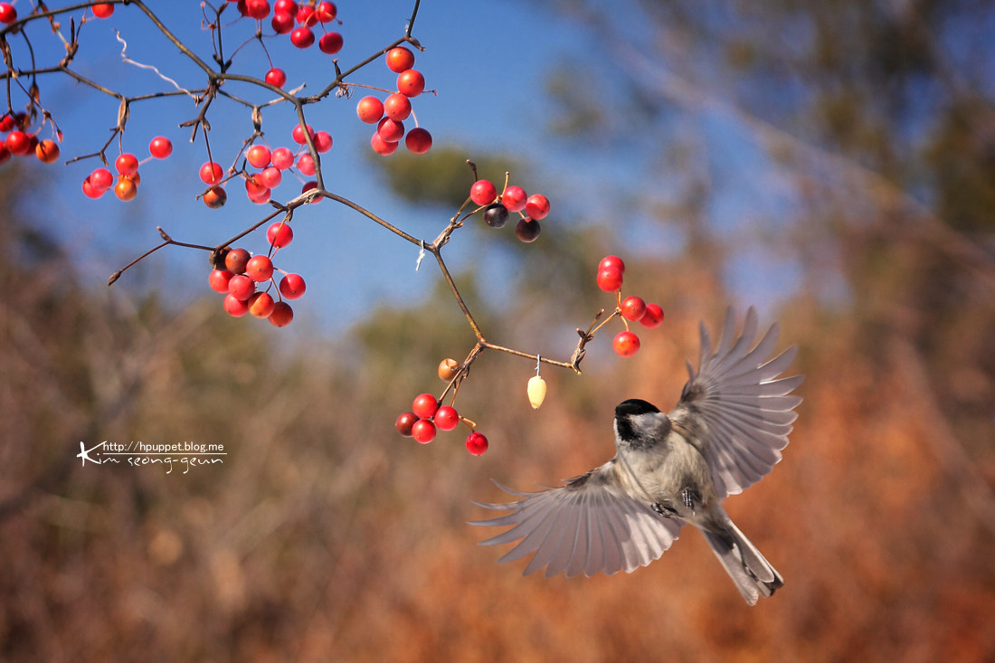 Photograph Bird by kim seong-geun on 500px