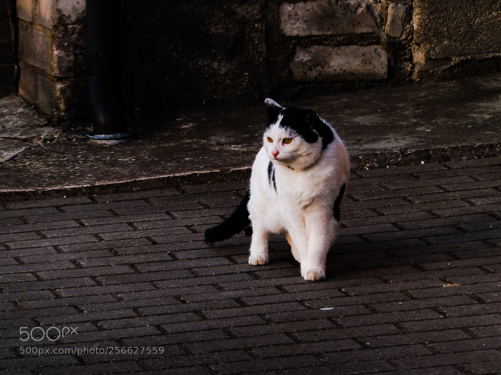 """Fujifilm FinePix F660EXR sample photo. """"Cat on the road"""" photography"""
